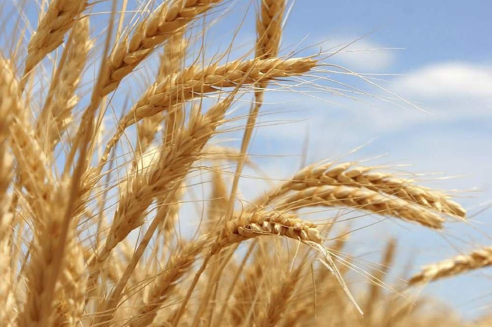 ТОП 10 Полезных продуктов для красивых и здоровых волос