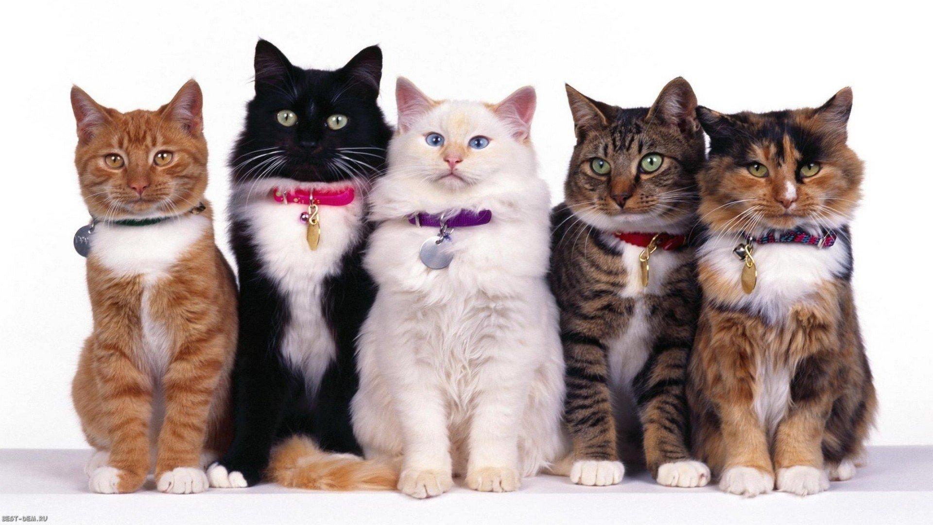 ТОП 10 Красивых пород кошек