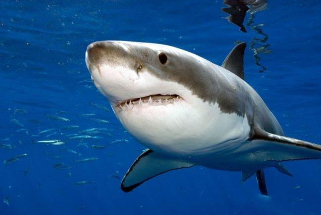 Топ 10 самых опасных животные в мире