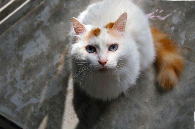 ТОП 10 Самые редкие породы кошек