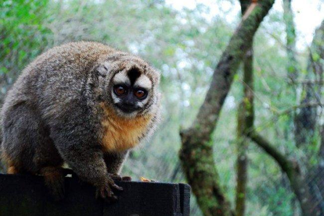 ТОП 10 Млекопитающих, о существовании которых, вы не подозревали