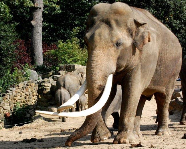 ТОП 10 Опасных животных — убийц людей