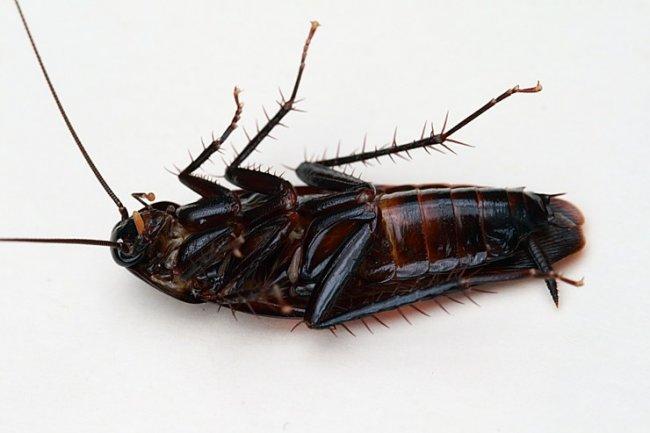 ТОП  10 интересных фактов о тараканах