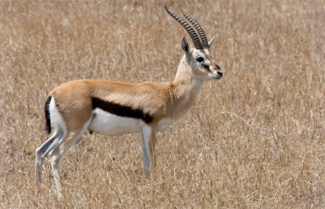 ТОП 10 Самых быстрых наземных животных