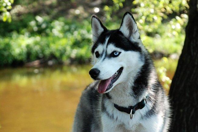 ТОП 10 Лучших семейных собак