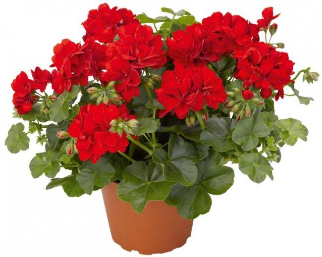 ТОП 10 Самых популярных комнатных растений