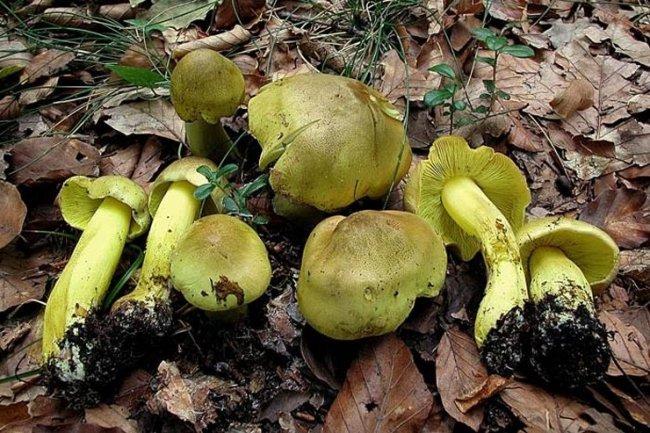 ТОП 10 Самых опасных и ядовитых грибов в мире