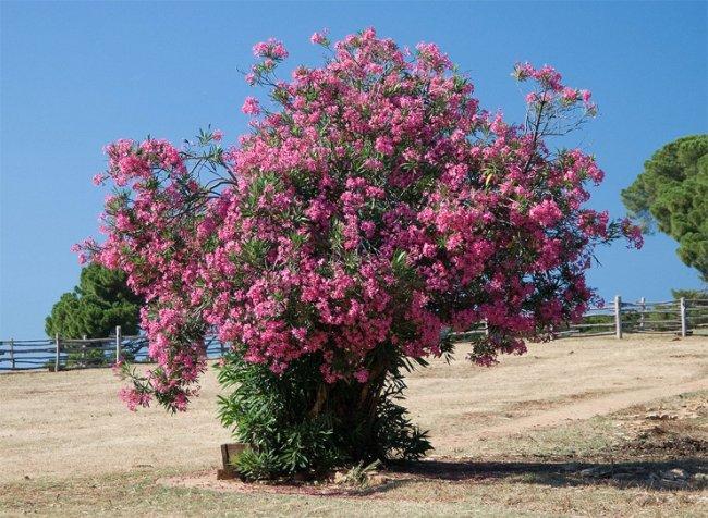 ТОП 10 Самых ядовитых растений в мире