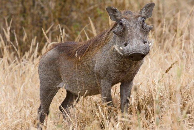 ТОП 10 Самых уродливых животных в мире