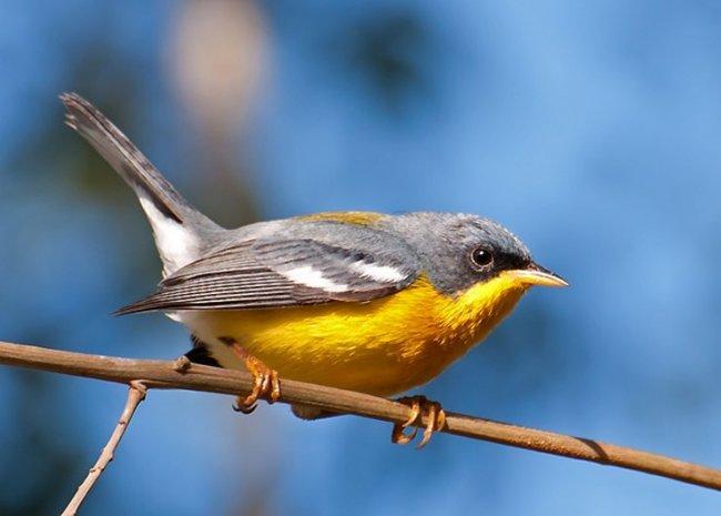 ТОП 10 Самых Маленьких птиц в мире