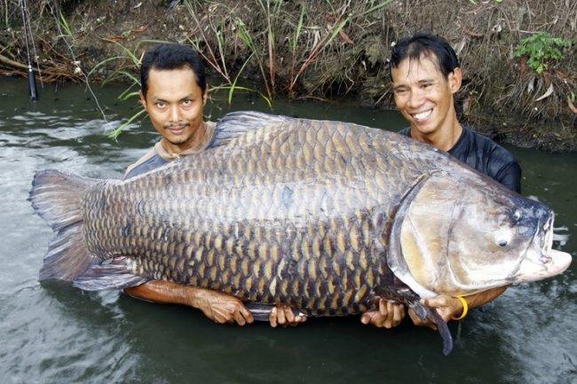 ТОП 10 Самых крупных пресноводных рыб мира