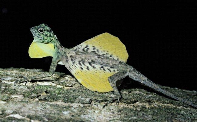ТОП 10 Самых необычных ящериц мира
