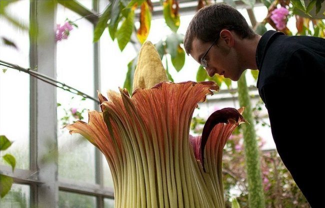 ТОП 10 Цветов с самым неприятным запахом