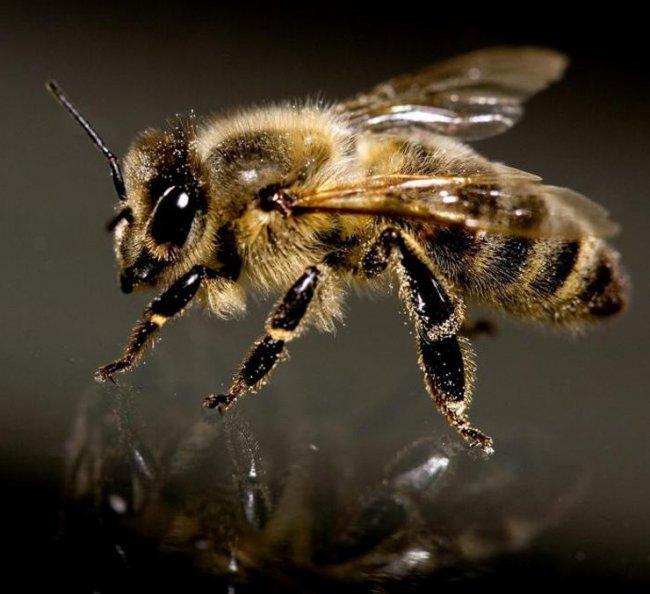 ТОП 10 Самых опасных насекомых в мире