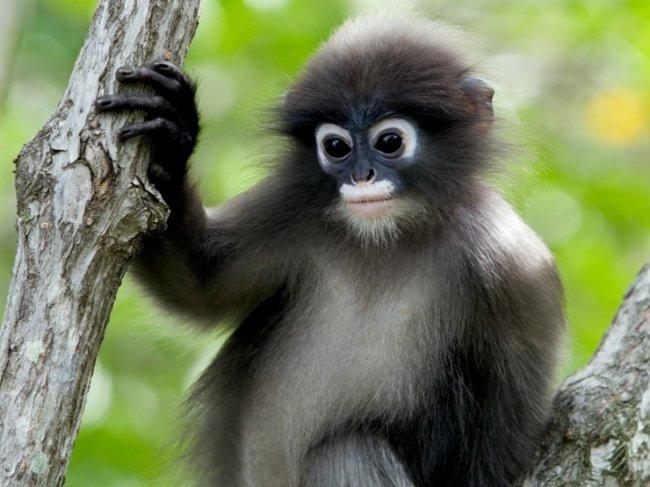 ТОП 10 Самых необычных видов обезьян