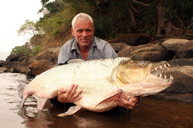ТОП 10 Самых опасных рыб в мире