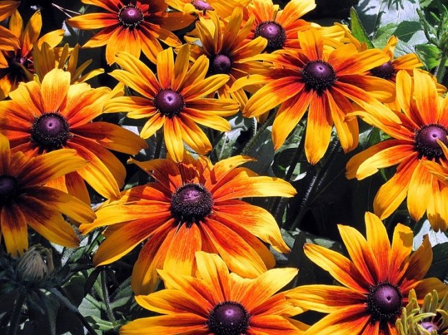 ТОП 10 Самых красивых цветов в мире