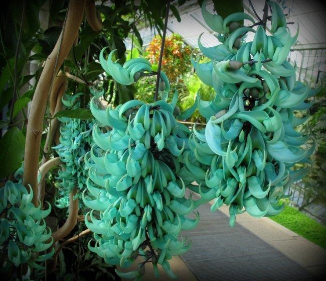 ТОП 10 Самых редких цветов в мире