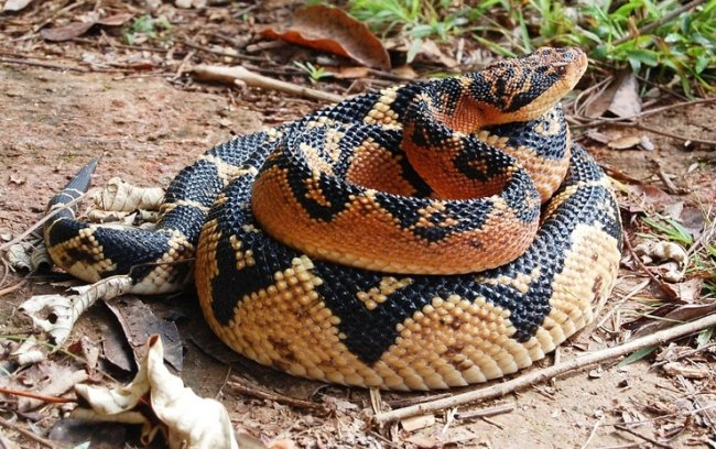 ТОП 10 Самых длинных змей в мире