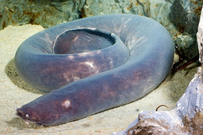 ТОП 10 Доисторических рыб считавшиеся вымершими
