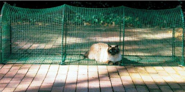 ТОП 10 Самых необычных и дурацких товаров для животных