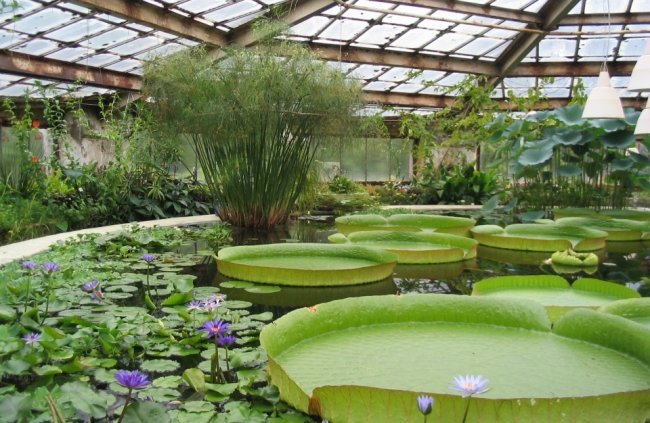 ТОП 10 Лучших ботанических садов мира