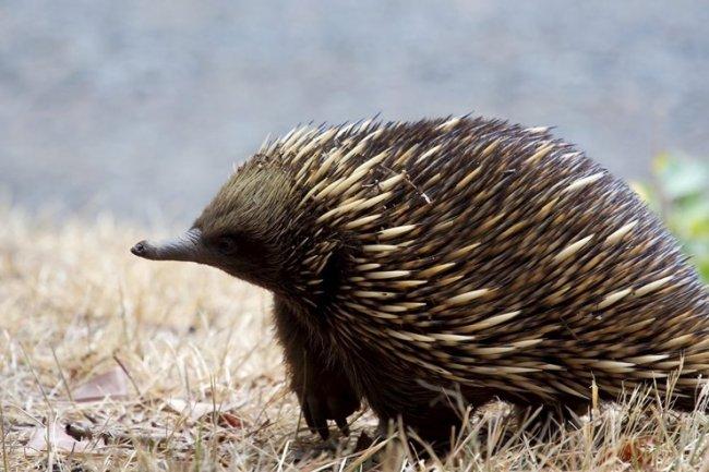 ТОП 10 Самых колючих животных в мире