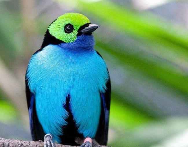 ТОП 10 Самых красивых птиц в мире
