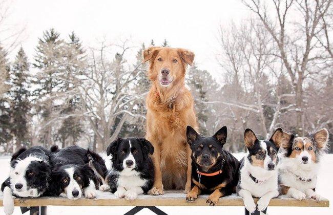 Самые редкие породы собак