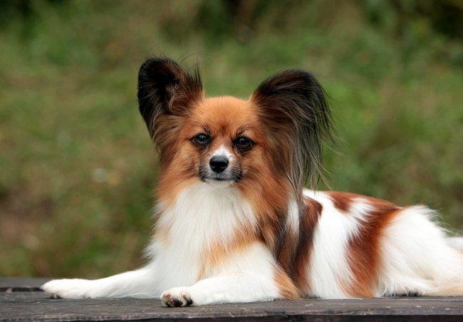 Самые красивые собаки в мире
