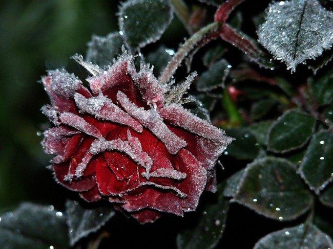 Самые удивительные природные явления зимы