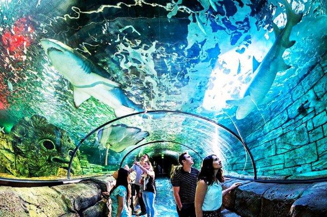 ТОП 10 Самые большие океанариумы в мире