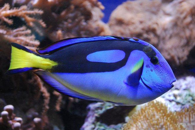 ТОП 10 Самые ядовитые рыбы в мире