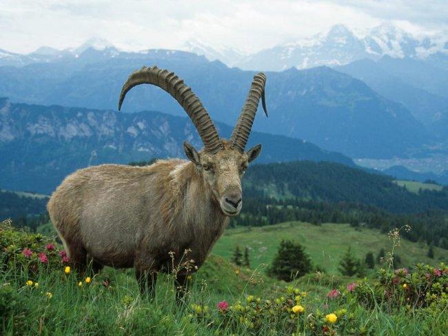 10 животных, которых «выкинули» из Красной Книги в 2019 года