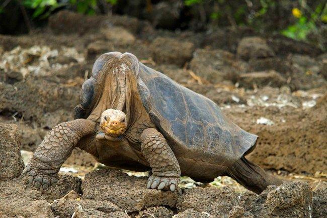 ТОП 10 Самые долгоживущие животные
