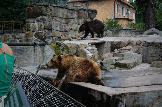 Самые большие зоопарки России