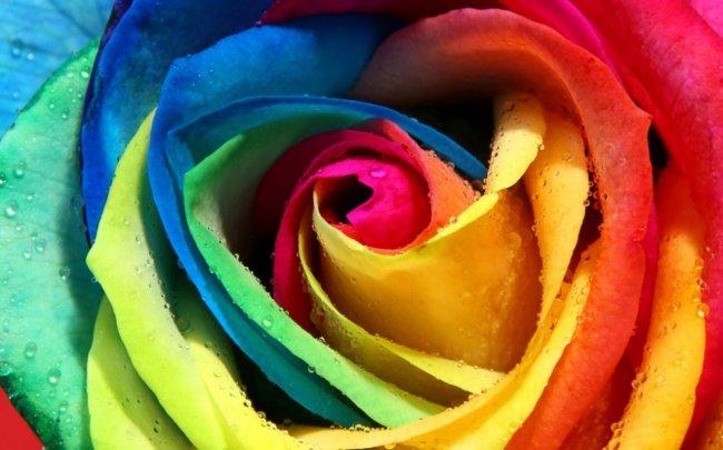 Самые дорогие цветы в мире