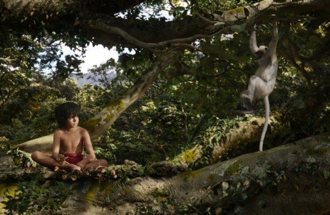 ТОП 10 Лучшие фильмы про джунгли и приключения