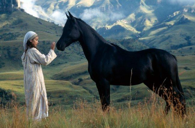 Фильмы про лошадей
