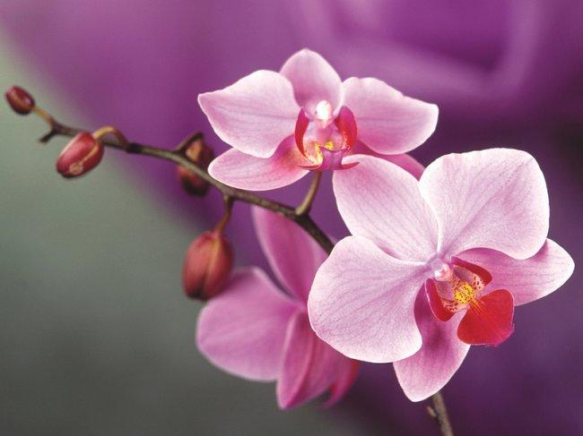 ТОП 10 Самых ярких и красивых цветов