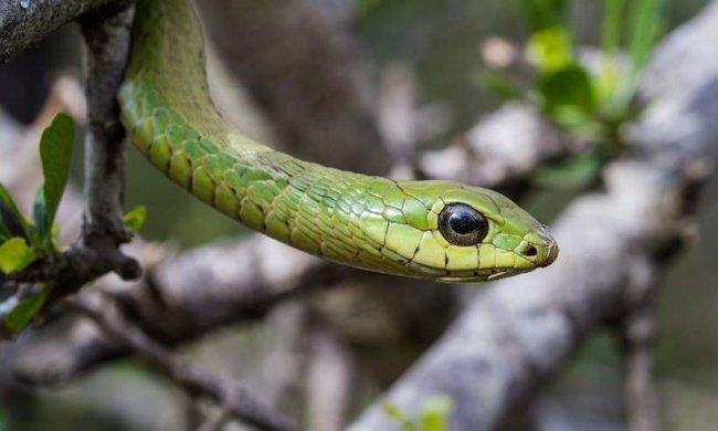 ТОП 10 Самых опасных змей убийц