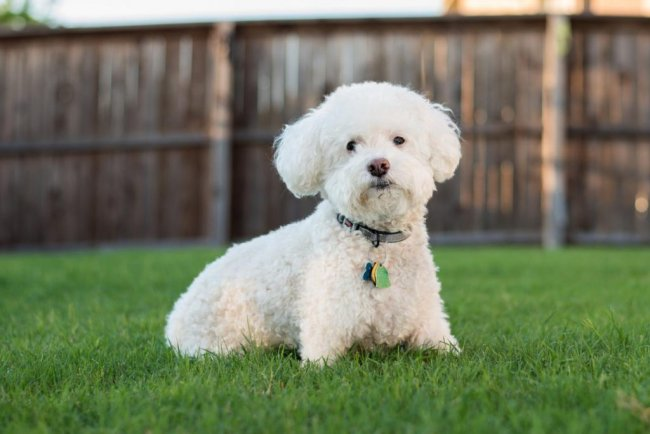 ТОП 10 Пород самых маленьких собак